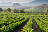 Vineyard, San Vicente de la Sonsierra as background, La Rioja — Stock Photo
