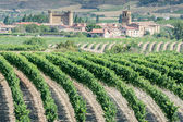 Vineyard, Sajazarra as background, La Rioja — Stock Photo