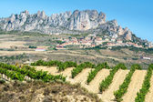 Vineyard, Cellorigo as background, La Rioja — Stock Photo