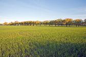 Weiden — Stockfoto