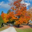 Colorful autumn trees — Stock Photo #18581095