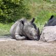 Stock Photo: African Rhinoceros