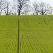 Rows of soy plants — Stock Photo