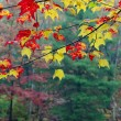 Stock Photo: Colorful trees