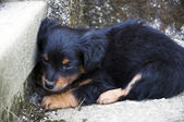 Abandoned Puppy — Stock Photo