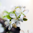 Stock Photo: White flower on branch