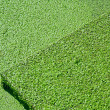 Planked footway completely covered with bright green duckweed — Stock Photo