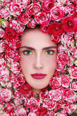 Beauty in roses — Stock Photo