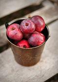 Bucket of apples — Stock Photo