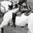 Beautiful white horse in bullring, bullfight in Spain, black and — Foto de Stock