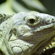 Green lizard skin detailing hard and scaly — 图库照片