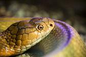 Snakehead szczegóły — Zdjęcie stockowe