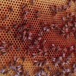 Close up view of the working bees on honeycells. - 