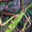 Huge and mysterious stick insect - Stockfoto