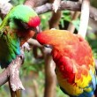 Pair of colorful parrots in the rain in the jungle - Stock Photo