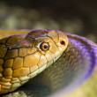 Stock Photo: Snakehead detail