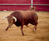 Brave and dangerous brown bull in the bullring — Stock Photo