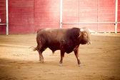 Spanish brown bull, Madrid, Spain. — Stock Photo