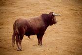 Bullfight in arena, Madrid Spain — Stock Photo