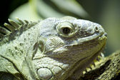 Green lizard skin detailing hard and scaly — Stock Photo