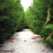 Footpath in summer green forest - 