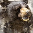 Artistic portrait with textured background, black bear head - Stock Photo