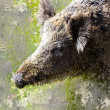 Artistic image with textured background, boar head — Stock Photo