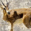 Artistic image with background texture, gazelle - Stock Photo