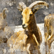 Ibex. Artistic image with background textures - Stok fotoğraf