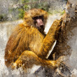 Artistic portrait with textured background, baboon - Stock Photo
