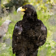 Black Eagle, artistic image with textured background - Stock Photo