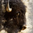American bison (Bison bison) Artistic portrait with textured bac - Stock Photo