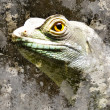Iguana over textured background — Stock Photo