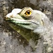 Iguana over textured background - Stock Photo