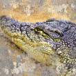 Artistic portrait of a Crocodile with textured background - Stock Photo