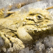 Iguana closeup shot, Artistic portrait with textured background - Stock Photo