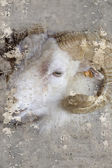 Artistic portrait with textured background, ram head with horns — Stock Photo
