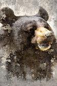Dokulu arka plan, siyah ayı kafası ile sanatsal portre — Stok fotoğraf