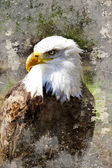Artistic portrait of a bald eagle (lat. haliaeetus leucocephalu — Stock Photo
