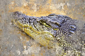 Artistic portrait of a Crocodile with textured background — Stock Photo