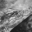 Artistic portrait of a Crocodile made with pencil - Stock Photo