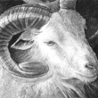 Great goat illustration made with digital tablet, sketch — Stock Photo