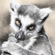 Illustration sketch of  lemur made with digital tablet - Photo