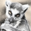 Illustration sketch of lemur made with digital tablet — Stock Photo #21624773