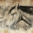 Sketch made with digital tablet, horse head — Stock Photo #21624881