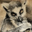 Illustration made with digital tablet, lemur in sepia - Stock Photo