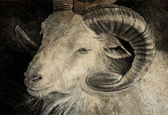 Sketch made with digital tablet of goat head with big horns — Stock fotografie