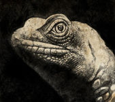 Sketch made with digital tablet of lizard head in sepia — Stock Photo