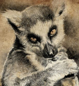 Illustration made with digital tablet, lemur in sepia — Stock Photo