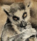 Ilustrace s digitálním tabletu, lemur v sépie — Stock fotografie